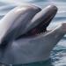 Delfinen2
