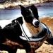 Bettan Greyhound Waern