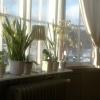 Bilder från Café Bogården