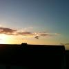 Robin på en solnedgångs tur
