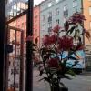 Utsikt genom fönstret, St Eriksgatan 70