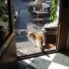 Bilder från Glass-Cafét Visby
