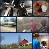 Bilder från Café Storeberg