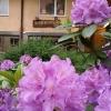 Bilder från Aiyara