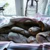 Bilder från Skansen