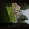 Bilder från Skogs kyrkoruin