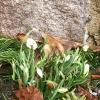 En grå och regnig dag som denna njuter vi lite extra av våra små vårtecken i trädgården.  Naturen är lika fin i alla väder, kom in i receptionen och låna ett paraply ☔️ och ut och njut av vår vackra natur i Skåne Tranås.