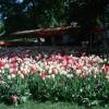 Bilder från Floras Kulle