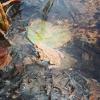 Bilder från Flisby badpl., Anebysjön