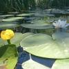 Bilder från Bastusjön