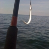 Bilder från Malmstens Fisk och Kök