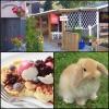Bilder från Hjortsberga Kiosk och Café