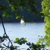 Bilder från Humlesjön