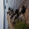 Bilder från Munkholmens badplats