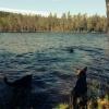 Bilder från Dagsjön