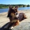 Bilder från Hältorpssjön