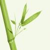 Bilder från Grön Bambu