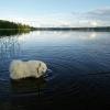 Bilder från Knutsbotjärnen