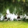 Bilder från Kocktorpssjön