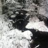 Bilder från Kvinnestadssjön