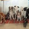 Bilder från Bull-Dog Café