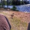 Bilder från Forsbacka, Laduholmen