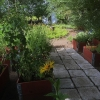 Bilder från Backagården Växthuscafè