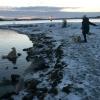 Bilder från Brandalsund Badplats
