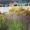 Bilder från Motalabadet