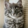 Bilder från Kattstallet Cirrus kafé