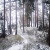 Bilder från Skärshults camping