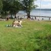 Bilder från Talbo Hällungen