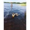 Bilder från Tulebosjön