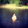 Bilder från Viksjön