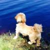 Bilder från Åsljungasjöns badplats
