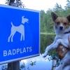 Bilder från Gropahålets Hundbad