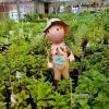 Från växthuset på Sund örtagård