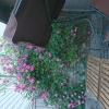 Uteservering i trädgården och på Rådgustorget