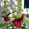Bilder från Camilles Trädgård och Café