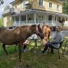 Även hästar är välkomna