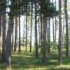 Bilder från Böda Hamns Camping