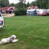 Bilder från Linneryds Camping