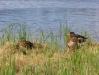 Stort antal fåglar i området
