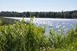 Att ligga nära sjön kan få vem som helst att koppla av och trivas.