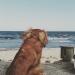 Hjälmaröds strandbad