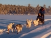Dogsledge lunch tour in Campalta