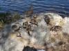 Lite närgångna fåglar vid sjön :)