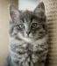 En hemlös katt som väntar på nytt hem