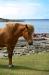 Islandshäst och fiskare i Stensjönaturreservat