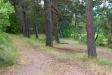 I skogskanten hänger en gunga.